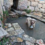 """U pramene bývalé palestické vesnice Sataf v Jeruzalémských horách. Vyhořela v průběhu arabsko-izraelské války v roce 1948 . To bylo umístěno 10 km západně od Jeruzaléma , s údolím Sorek , hraničící na východ. Dva prameny, Ein Sataf a Ein Bikura, proudí z místa do koryta pod ním. Klášter, který se nachází naproti údolí Sataf, tedy jižně od Wadi as Sarar, známý místními Araby jako Ein el-Habis (""""jaro poustevny""""), je oficiálně nazýván klášterem svatého Jana v divočině"""
