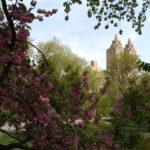 Kvetoucí Central Park byl prostě naprosto dokonalý