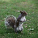 Tyto veverky jsou v Central parku tak krotké, že jsou až drzé :-)