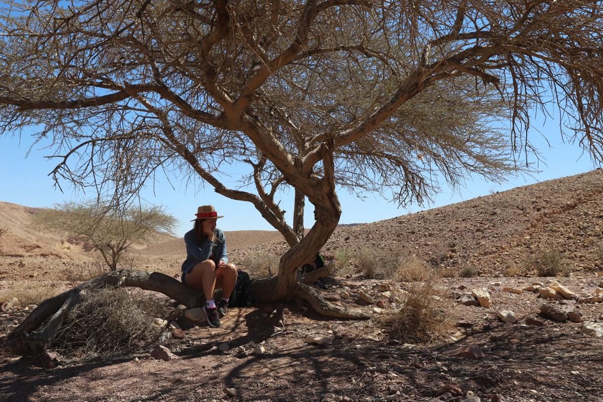Romča odpočívá ve stínu jednoho z mála stromů na poušti