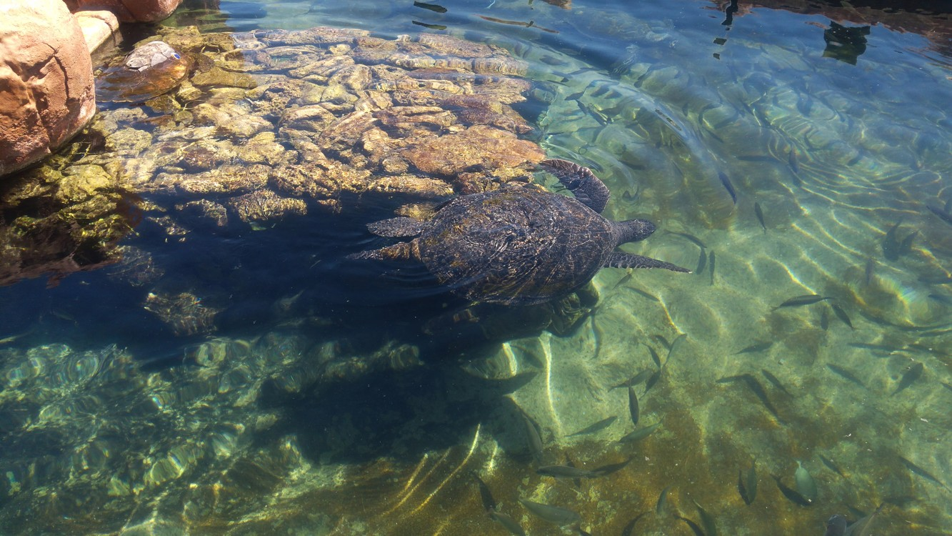 Obří želvy v podmořské observatoři