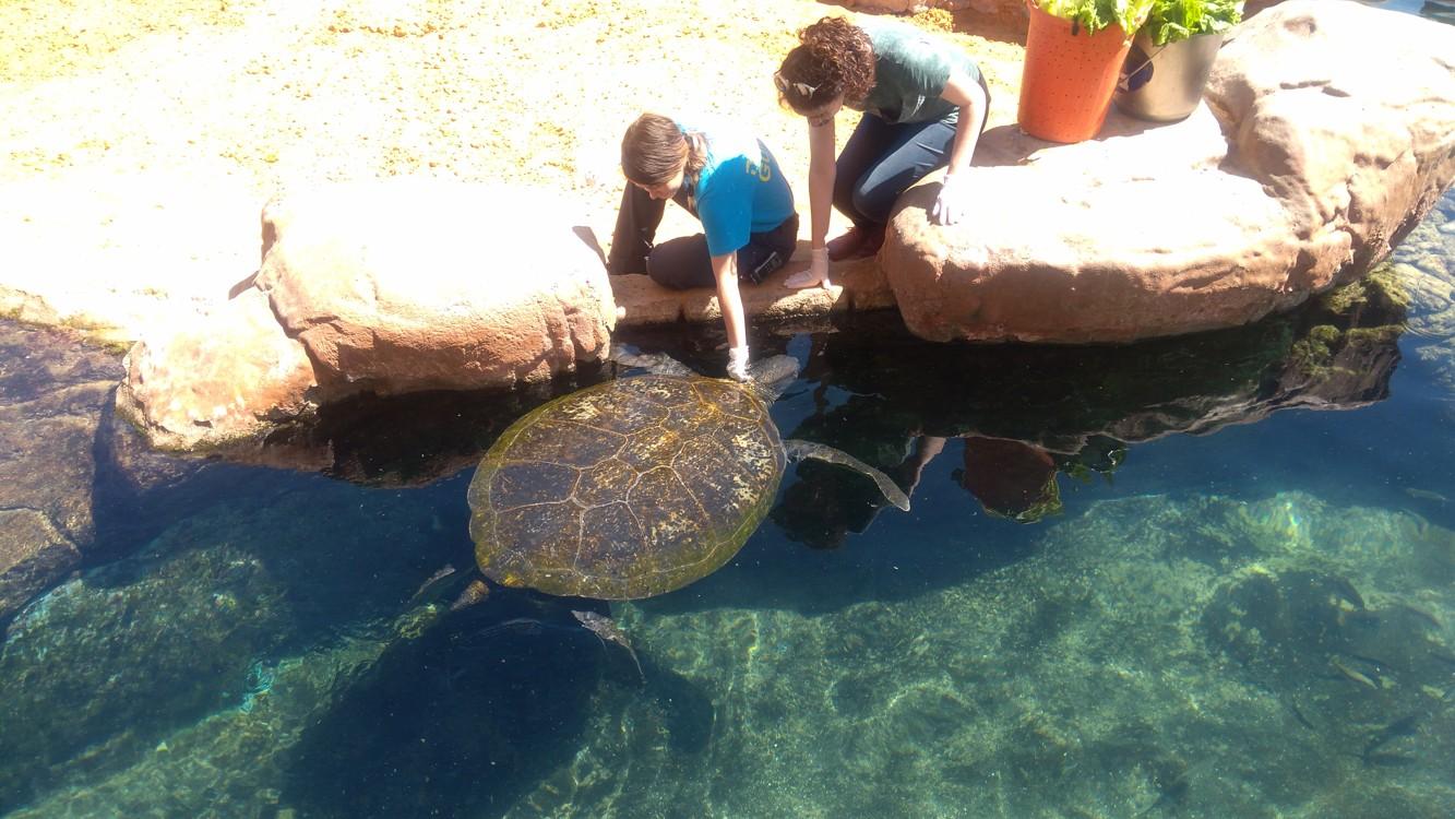 Krmení obřích želv v podmořské observatoři