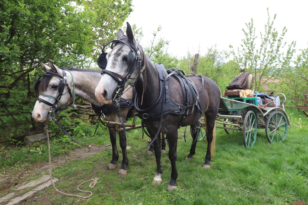 Koně a povoz Martina Hudečka z Hrubé Vrbky