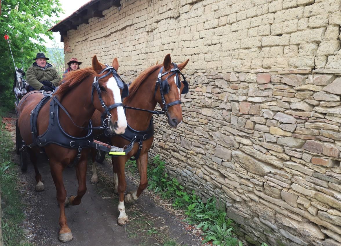 Trojice koňských povozů vyráží na dlouho cestu