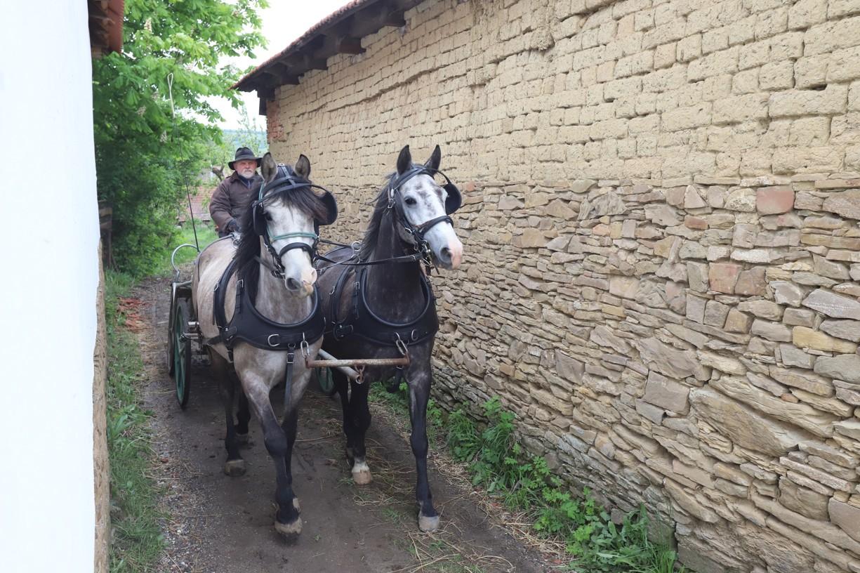 Koňský povoz Martina Hudečka z Hrubé Vrbky