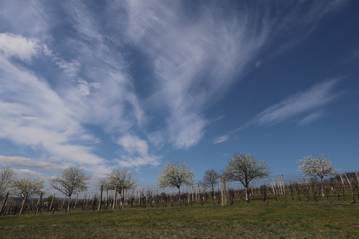 Cesta na Antonínek vedla krásnou rozkvetlou přírodou.