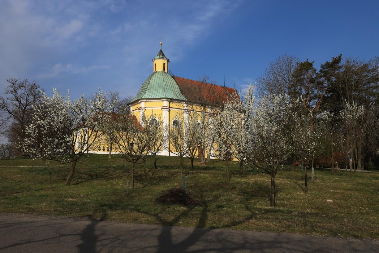Kvetoucí Antonínek v dnešním ránu.