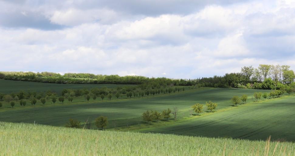 Výsadba stromů proměňuje krajinu mezi Moravským Pískem a Domanínem k nepoznání...
