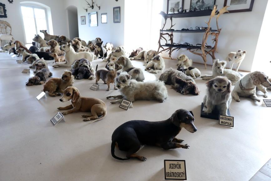 Poslední soukromý majitel hradu baron J. Haas z Hasenfelsu miloval zvířata; na hradě založil soukromou ZOO (ve své době údajně největší v Evropě) a sbírku vycpaných psů, která s 49 jedinci nejrůznějších ras patří k nejrozsáhlejším na světě.