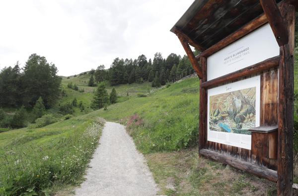 Začátek Heidiny květinové stezky, kterou známe z knihy Heidi děvčátko z hor - Heidi's blumenweg