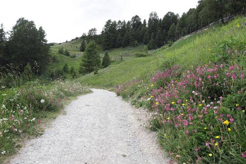 Procházka po květinové stezce Heidi, kterou známe z knihy Heidi děvčátko z hor - Heidi's blumenweg