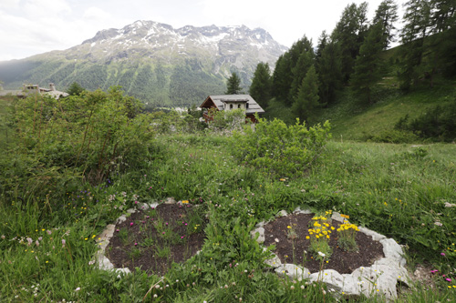 Na květinové stezce jsou záhonky ohraničené kameny. Ke stezce je vydán průvodce, ve kterém si mohou turisté najít konkrétní květiny, které zde v jednotlivých záhonech rostou