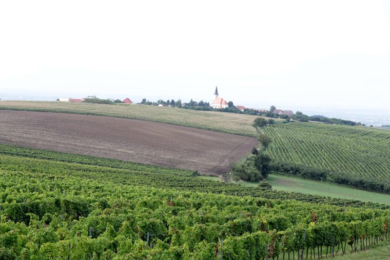 Z rozhledny je krásný pohled na vinohrady a kostel v sousední Vrbici.