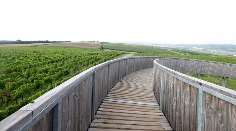 K  této rozhledně ve vinohradech v Kobylí míří mnoho turistů