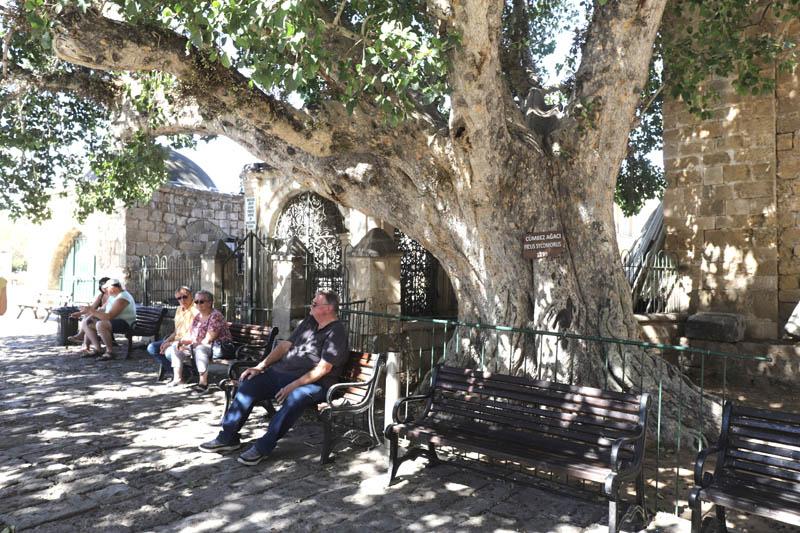 Před katedrálou lidé odpočívali ve stínu tohoto obřího stromu